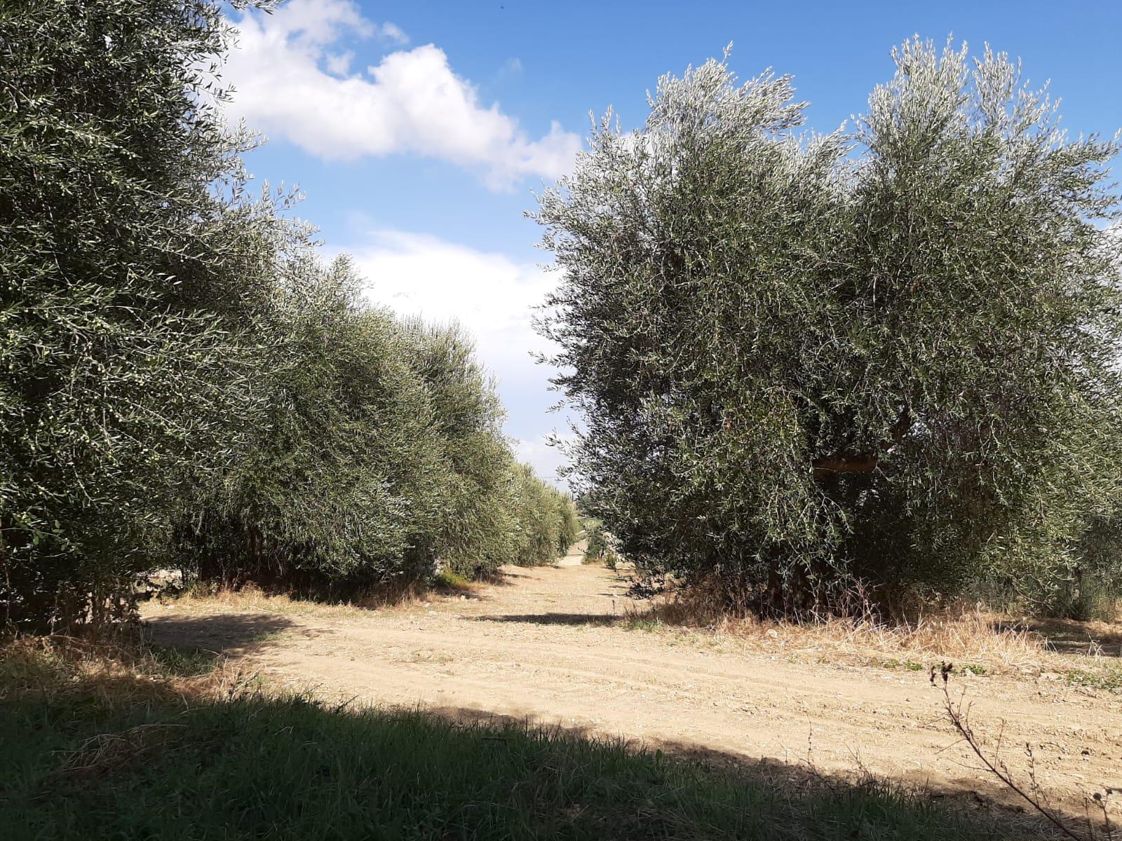 http://www.olivekiara.com/20190906_175621.JPG