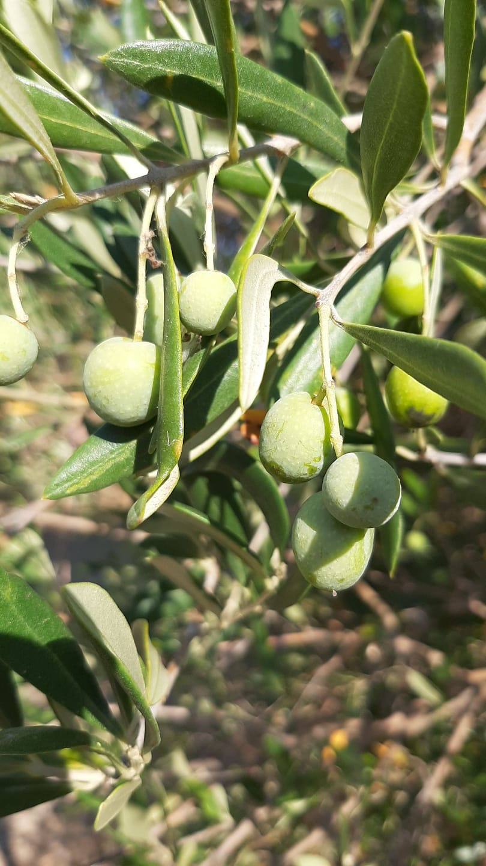 http://www.olivekiara.com/20200811_162635.JPG