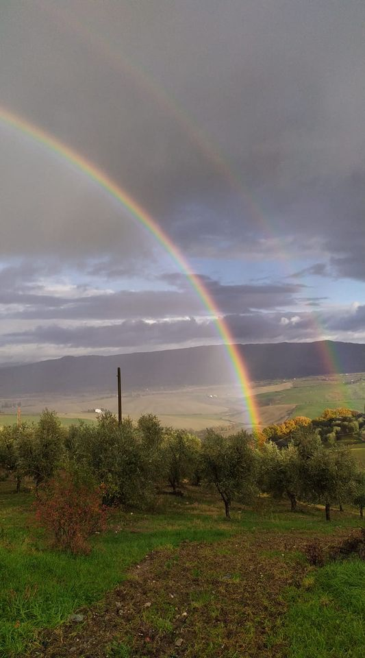 https://www.olivekiara.com/20201209_162816.jpg